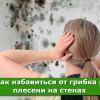 Как избавиться от грибка и плесени на стенах