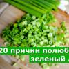 20 причин полюбить зеленый лук
