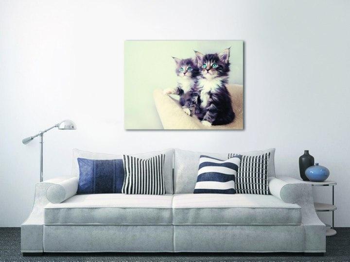 Картина на стене с котятами
