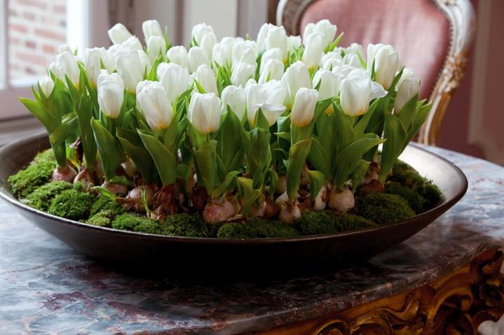 Белые тюльпаны на столе