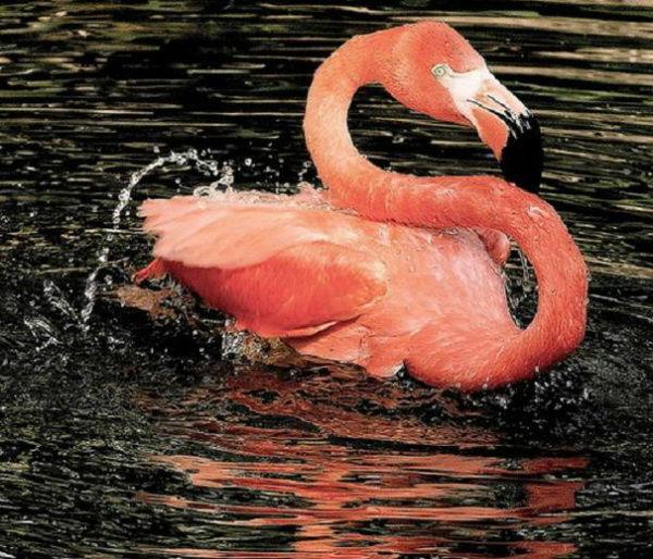 фламинго из пластиковой бутылки