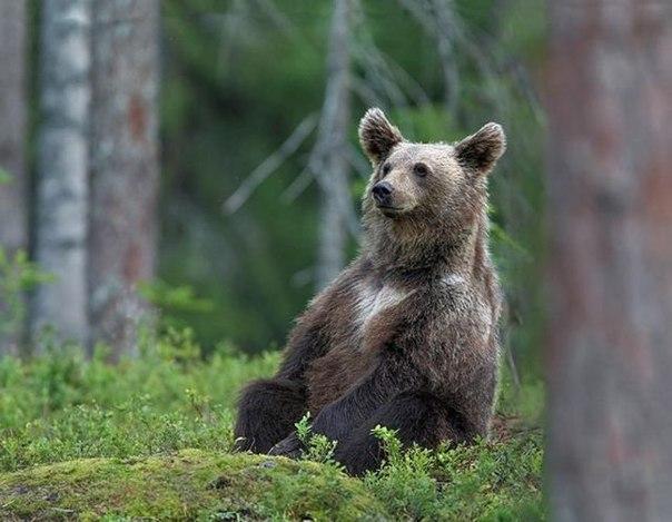medved-iz-plastikovix-butilok_5
