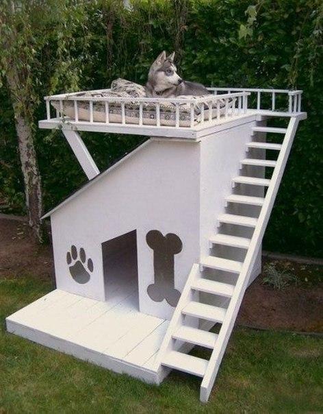 необычная будка для собак