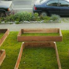 Парень вырастил фантастический урожай на крохотной лужайке рядом с домом всего за 60 дней